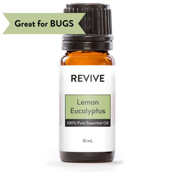 Eucalyptus citriodora